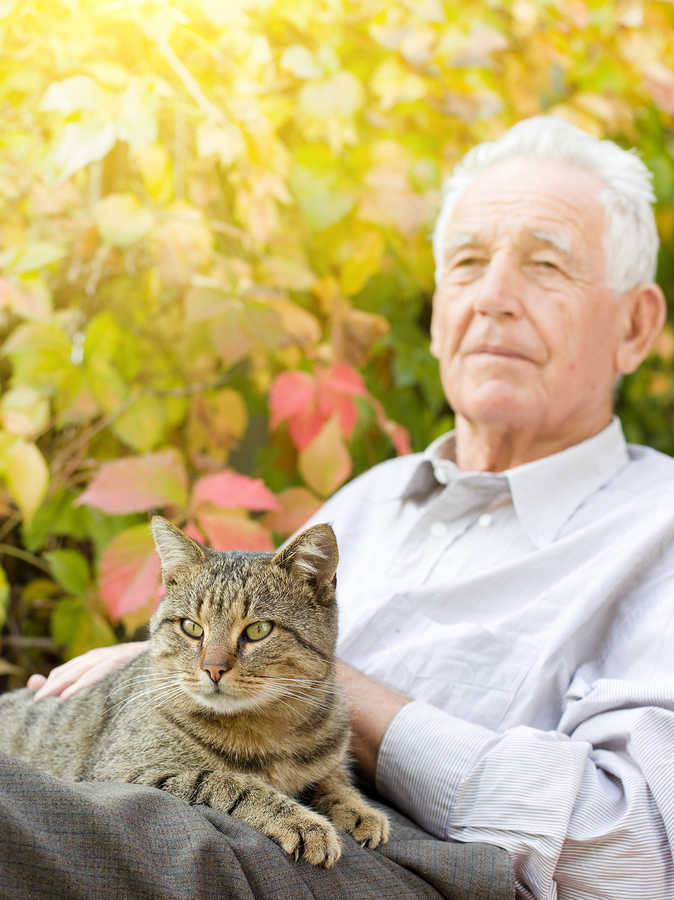 Elderly Care in Katy TX: Is a Pet the Best Way to Make Sure Your Mom Has a Companion?